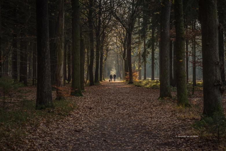 In the light - Mensingebos Drenthe<br /> Ik heb de foto wat donker gelaten om de mensen met hondje in het zonlicht mooi uit te laten komen