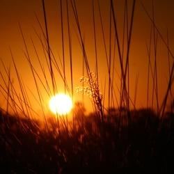 Zonsondergang Okavangodelta