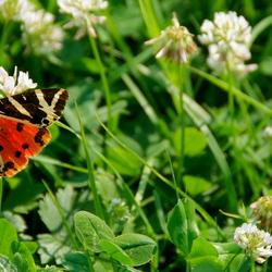 Vlinders gefotografeerd, gisteren.