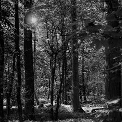 De zon door de bomen.