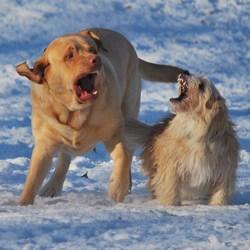 Spelend in de sneeuw