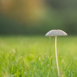 Klein maar fijn................paddenstoel