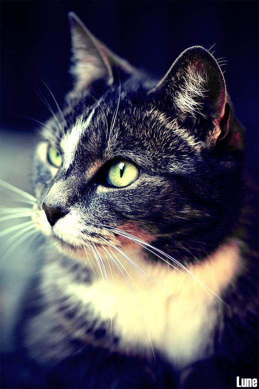 """Sammy - Mijn kat in de tuin, bewerkt met een tijdschriftenkleur <img  src=""""/images/smileys/smile.png""""/>"""