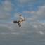 Lucht acrobaten