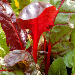 Kleurrijke groente