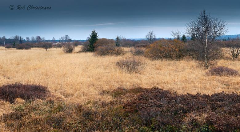 Hoge Venen - Vorig jaar November weer een bezoekje gebracht aan de Hoge Venen / Hautes Fagnes in België. Een prachtig natuurgebied net over de grens b