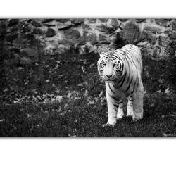 Oefening in zwartwit - De dierentuin (17)