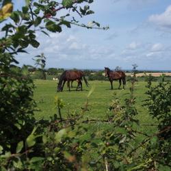Paardenwei