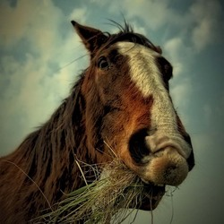 A horse of-course