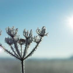 Hello frozen world