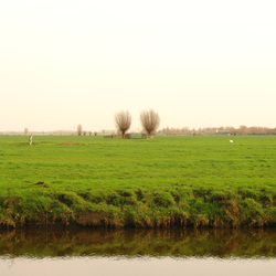 Weidse Polder