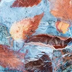 Bladeren in het ijs