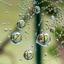 SpiderDrops - 1e prijs @ Bloem&Tuin 2017 fotowedstrijd 'Colourful Dutch Nature'