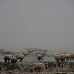Koud en mistig in de polder