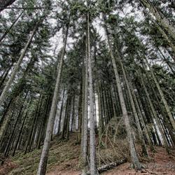 Luikse woud