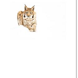 Lynx in het Beierse woud