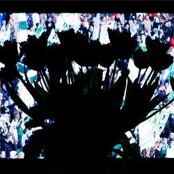 Bloemen voor de winnaar
