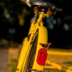 Bike & Butterfly