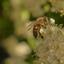 Beestjes in de tuin