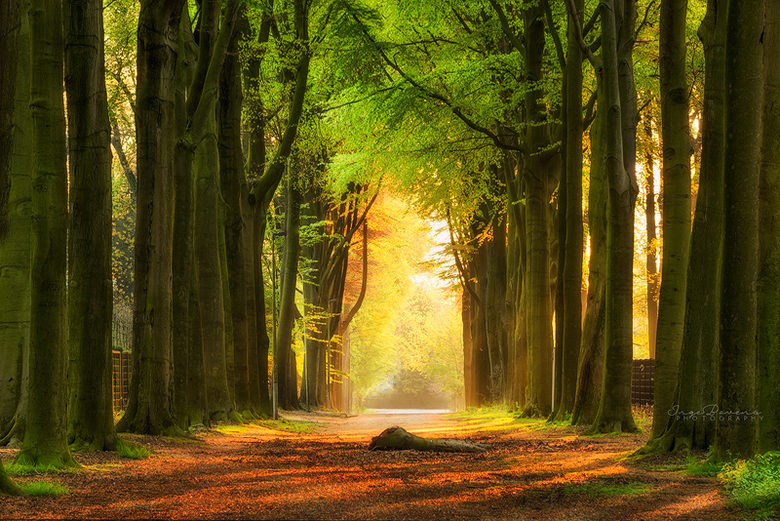 "Light at the End. - Fijne Pinksterzondag! <img  src=""/images/smileys/wilt.png""/>"