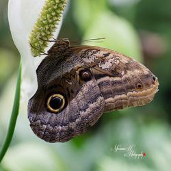 Vlindertuin tropicalzoo De Berkenhof