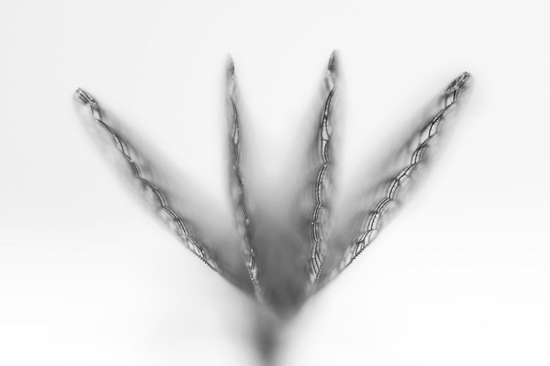 abstract damselfly - Wings of a damselfly