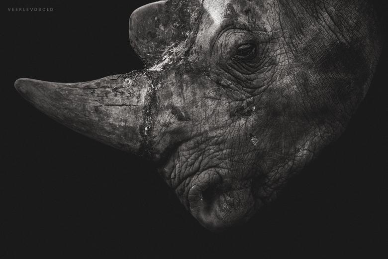 Rhinoceros  -