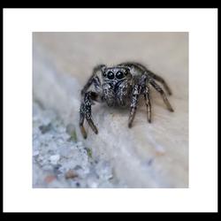 Eerste spin van 2009