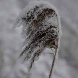 Stukje winter