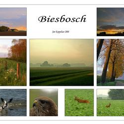 Collage Biesbosch