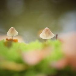 Hiking mushrooms