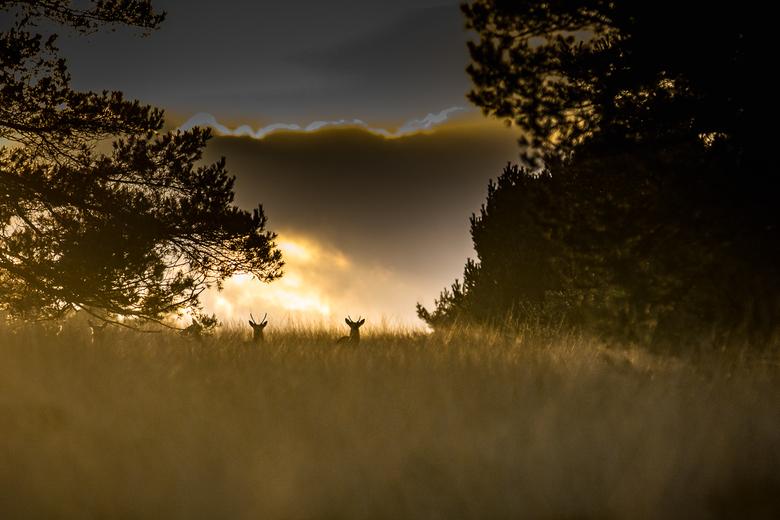Als de avond valt - Als de avond valt komen de dieren tot leven
