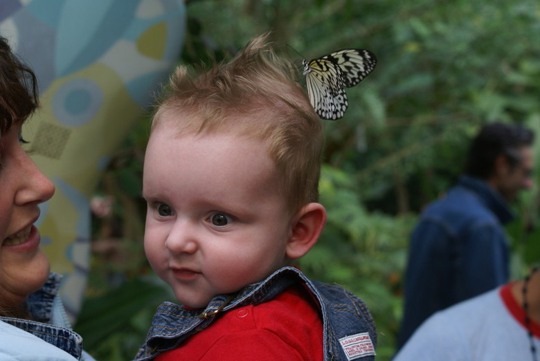 wat heb ik nou op mijn hoofd - we waren in de vlindertuin van Artis, en kleinzoon Sven kreeg een vlinder op het hoofd, die er met moeite van wat te ve