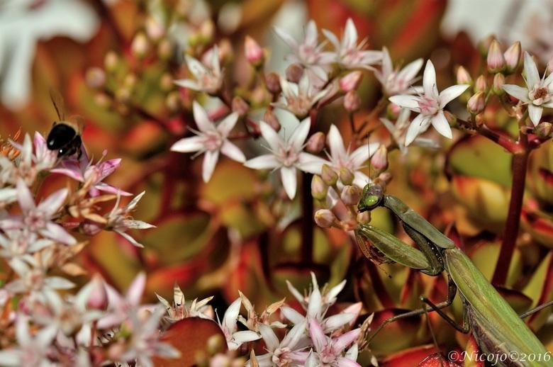 Food..... - De moneytree staat vol in bloei, vol met insecten......<br /> <br /> Bedankt voor al jullie reacties op mijn vorige foto.