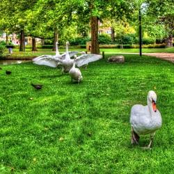 Vroege vogels in het park