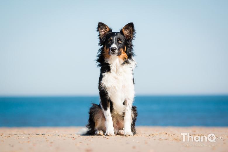 Jake op het strand -