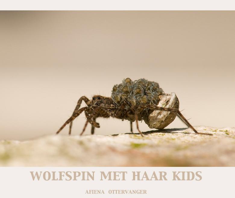 Wolfspin met haar kids - Deze wolfspin wandelde door onze groene container!<br /> Dacht even dat het een spin met schimmel op de rug was maar bij het