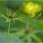 Éénbes (flashback flower3)