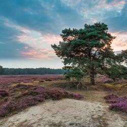 Het Groote Zand  Drenthe