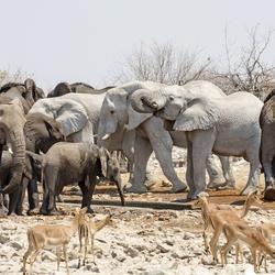 Namibië 148