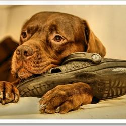 schoenendief