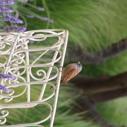 Vogeltje op een bankje