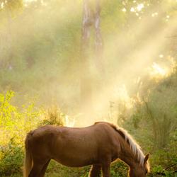 Paardje in de zon