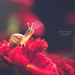nieuwsgierige slak