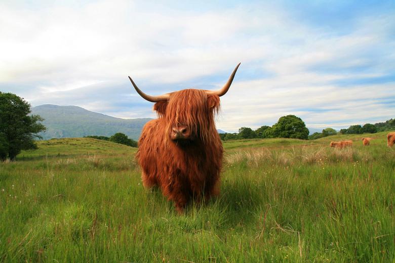 """Hooglander - Hooglander(s) in Schotland gespot, indrukwekkende rockers <img  src=""""/images/smileys/smile.png""""/>"""