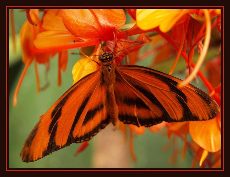 vlinder in het oranje - Even tussen de bedrijven door tijd om even te zoomen. Heb even ander dingen te doen en zal  even minder reageren op jullie up