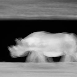 "Rhino ""ghost"""