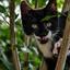 Kleine Milas in de boom aan het klimmen