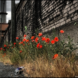 Une Fleur de Liège