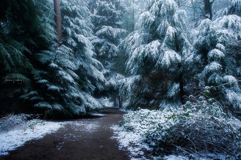 """Het heeft een beetje gesneeuwd - Wat een geluk dat ik op pad kon toen het had gesneeuwd <img  src=""""/images/smileys/smile.png""""/>"""